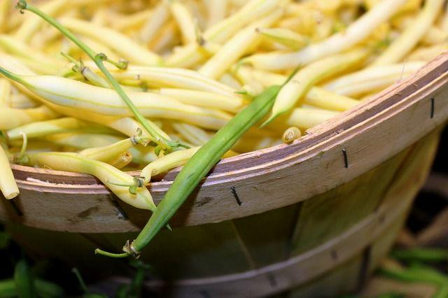 Sárgahüvelyű zöldbab