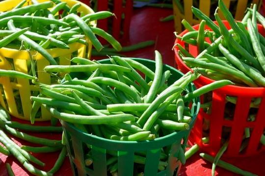 Zöldbab fesztivál